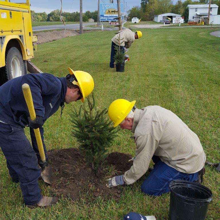 Linemen work to plant pine trees along the walkway.