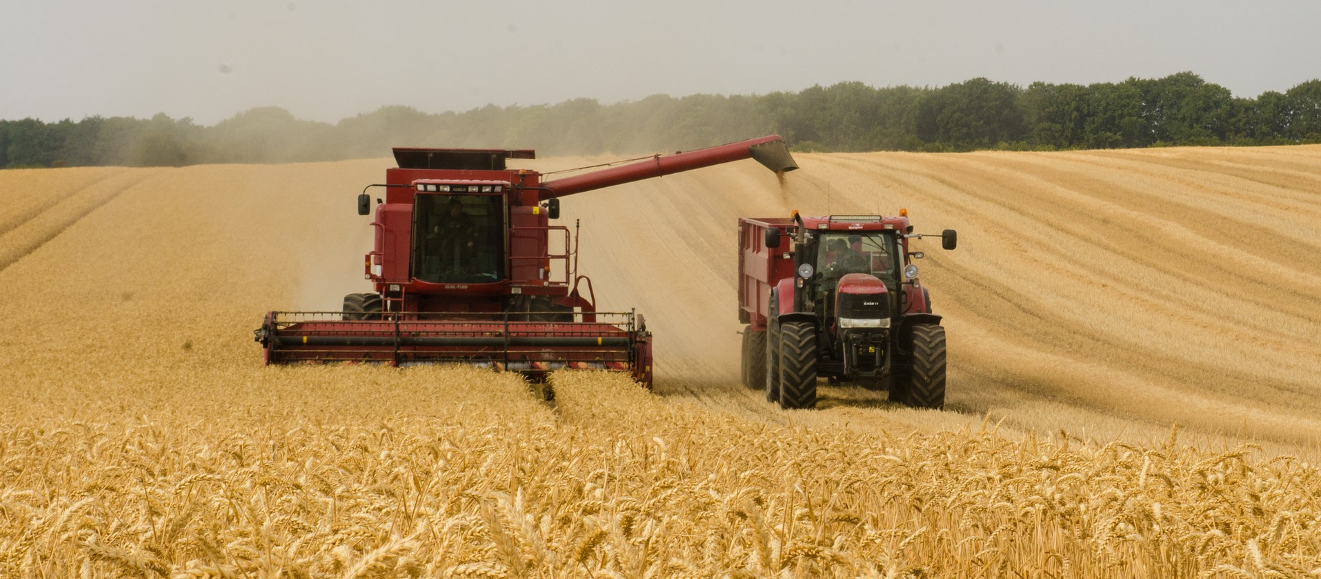 Combine and tractor harvesting wheat.